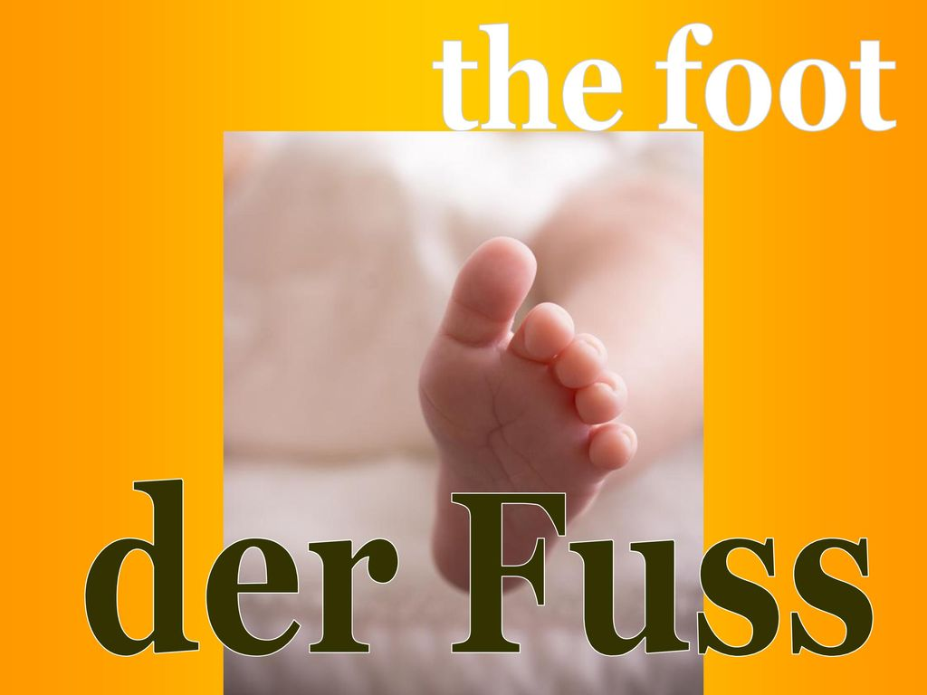 the foot der Fuss