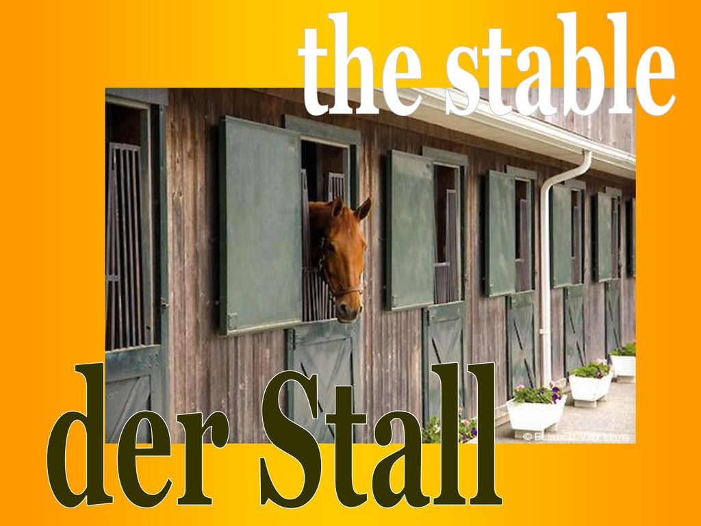 the stable der Stall