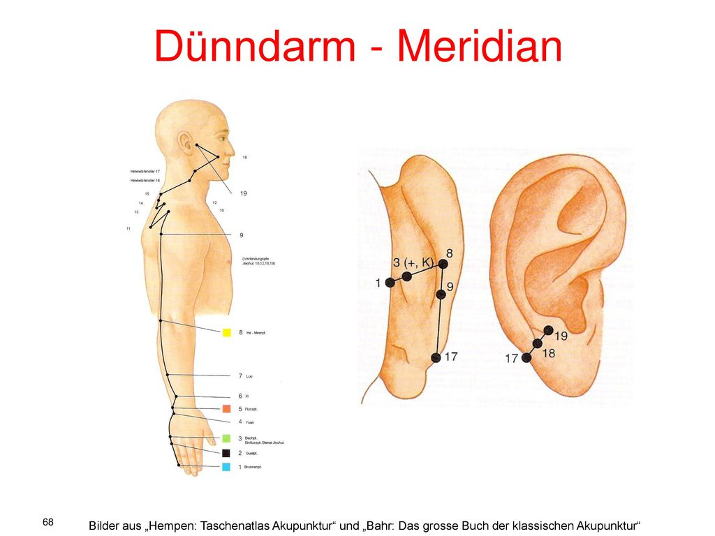 Atemberaubend Dick Und Dünndarm Fotos - Physiologie Von Menschlichen ...
