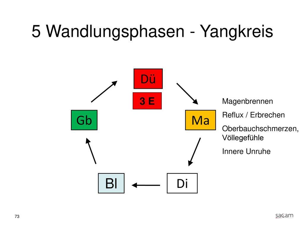 Magen (Yang) Regiert über Aufnahme und Zerlegung von Nahrung