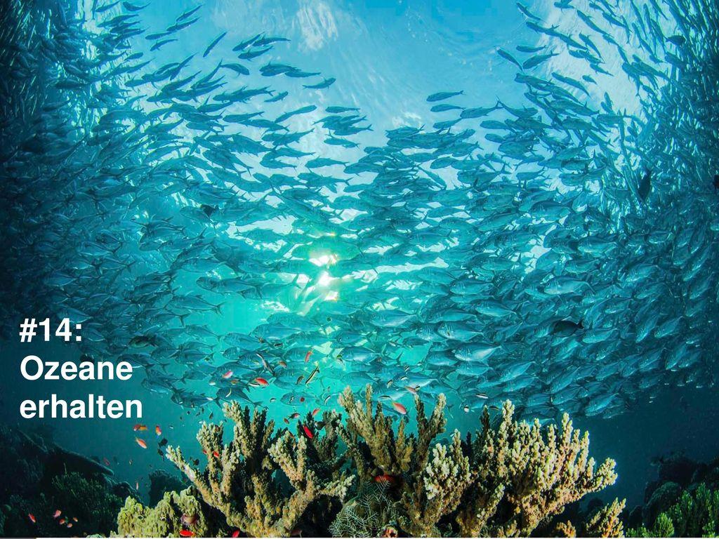 #14: Ozeane erhalten