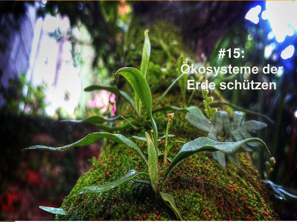 #15: Ökosysteme der Erde schützen