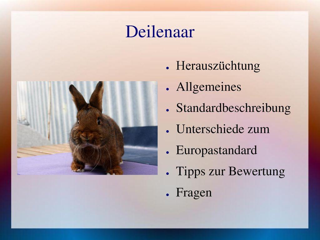 Deilenaar Herauszüchtung Allgemeines Standardbeschreibung