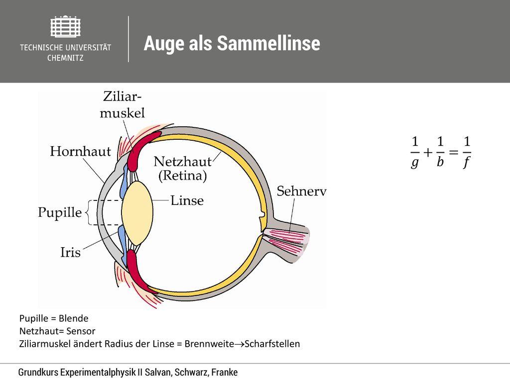 Auge als Sammellinse 1 𝑔 + 1 𝑏 = 1 𝑓 Pupille = Blende Netzhaut= Sensor