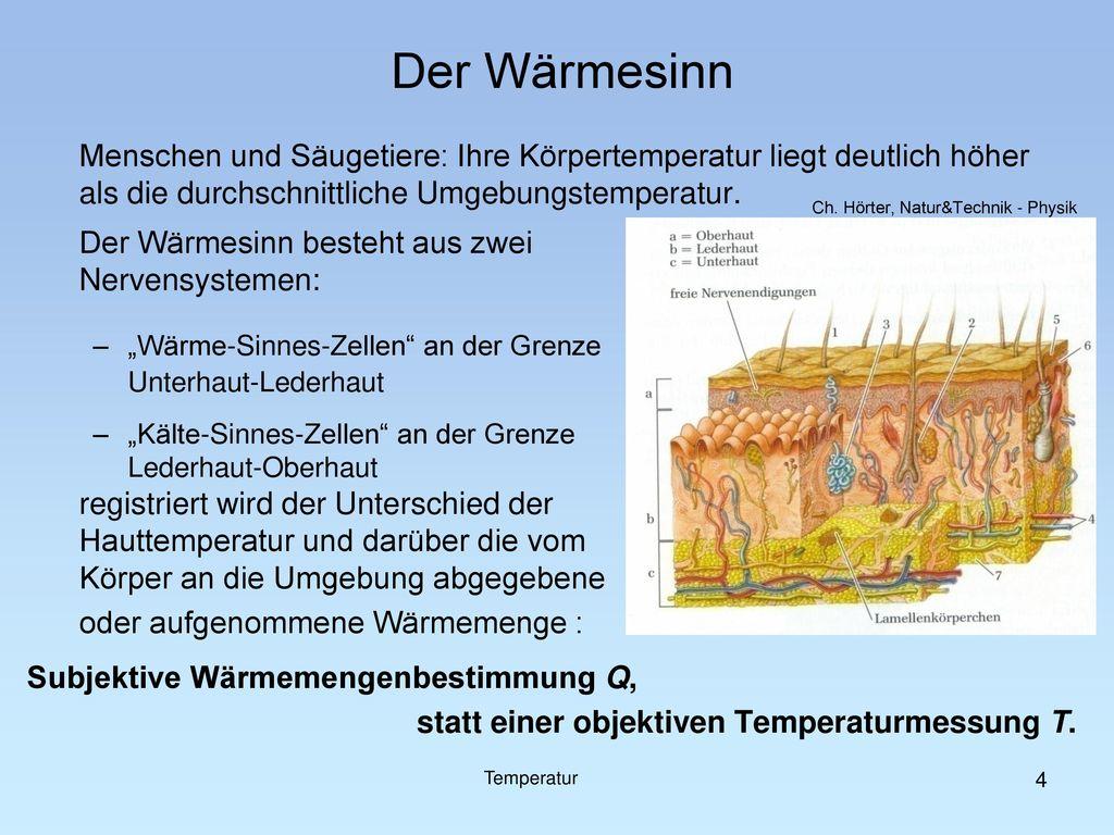 Der Wärmesinn Menschen und Säugetiere: Ihre Körpertemperatur liegt deutlich höher als die durchschnittliche Umgebungstemperatur.