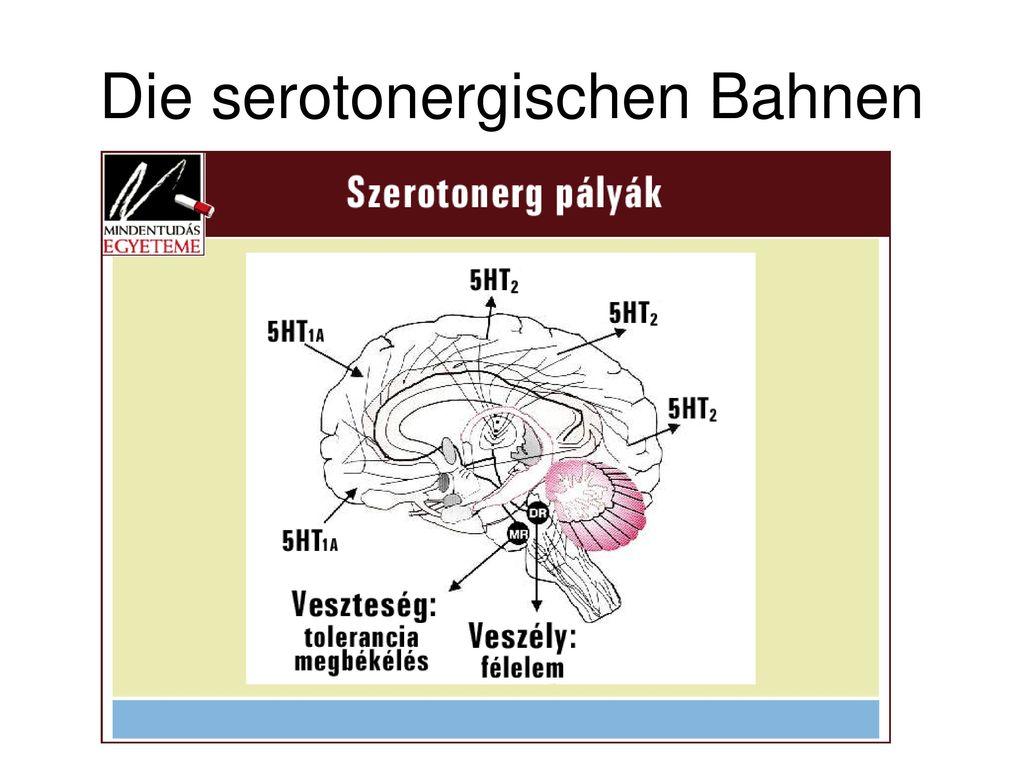 Die serotonergischen Bahnen