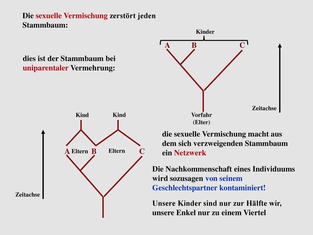Beste Blank Stammbaum Bilder - Bilder für das Lebenslauf ...