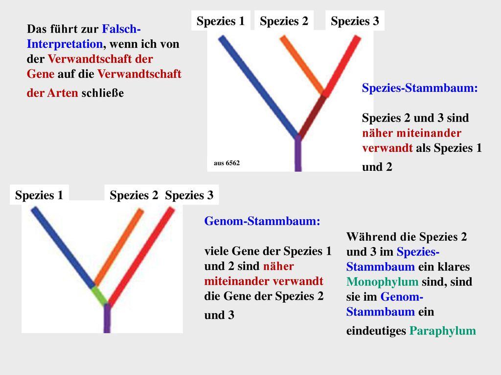 Spezies 1 Spezies 3 Spezies 2 Spezies 1 Spezies 3 Spezies 2