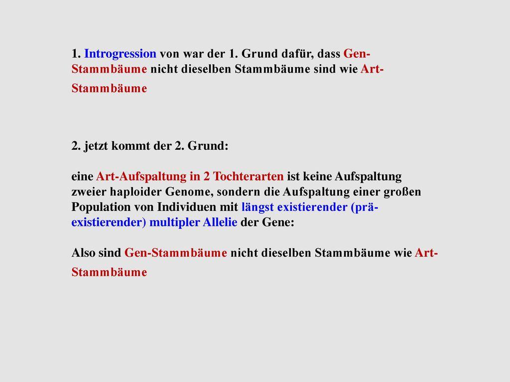 Charmant Stammbaum Gliederung Vorlage Galerie - Beispiel ...