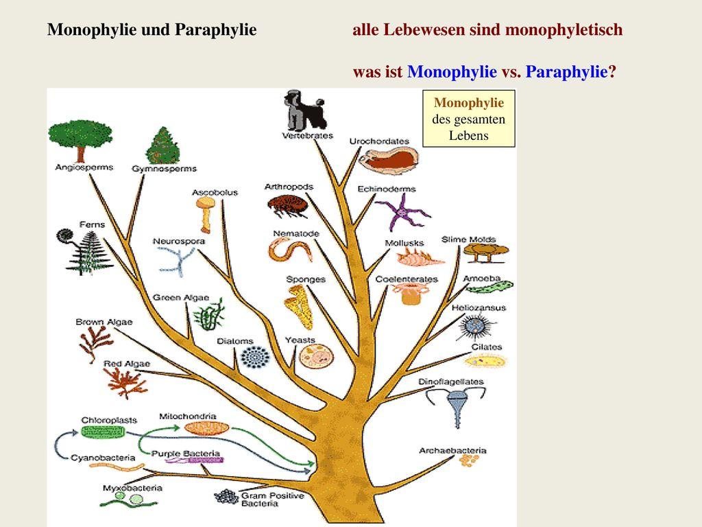 Monophylie und Paraphylie