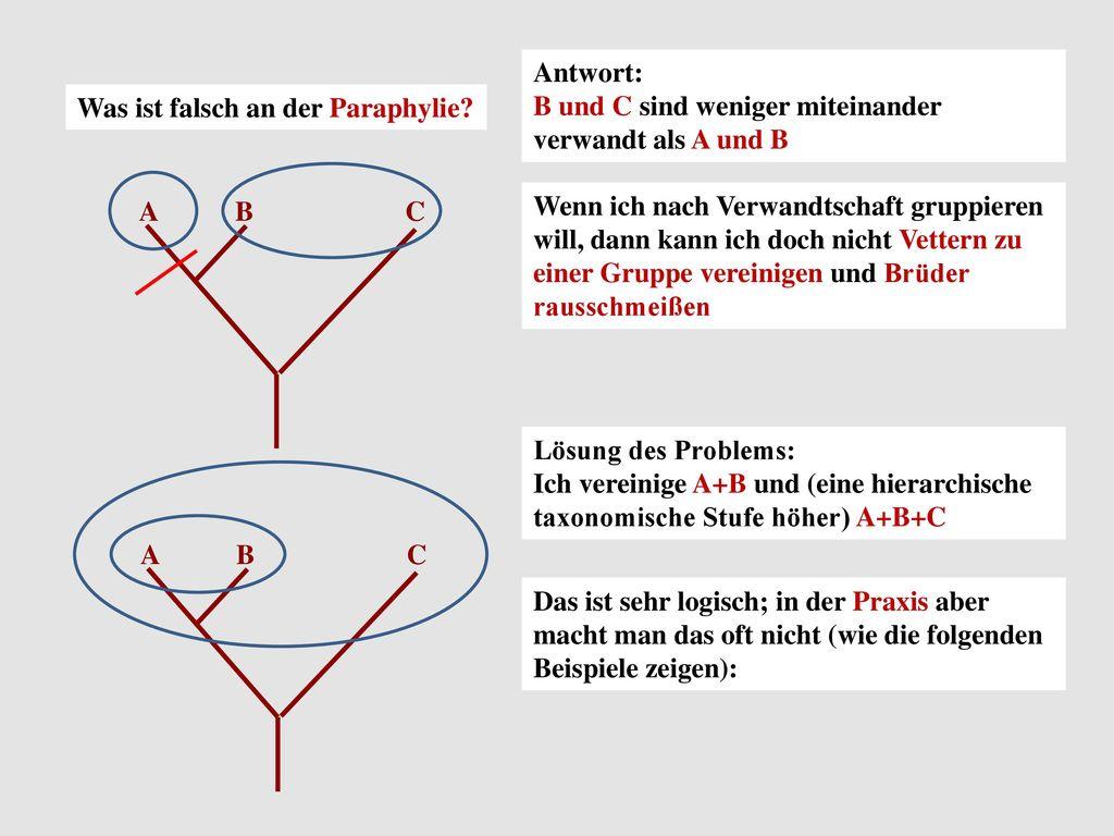 Antwort: B und C sind weniger miteinander verwandt als A und B. Was ist falsch an der Paraphylie A.