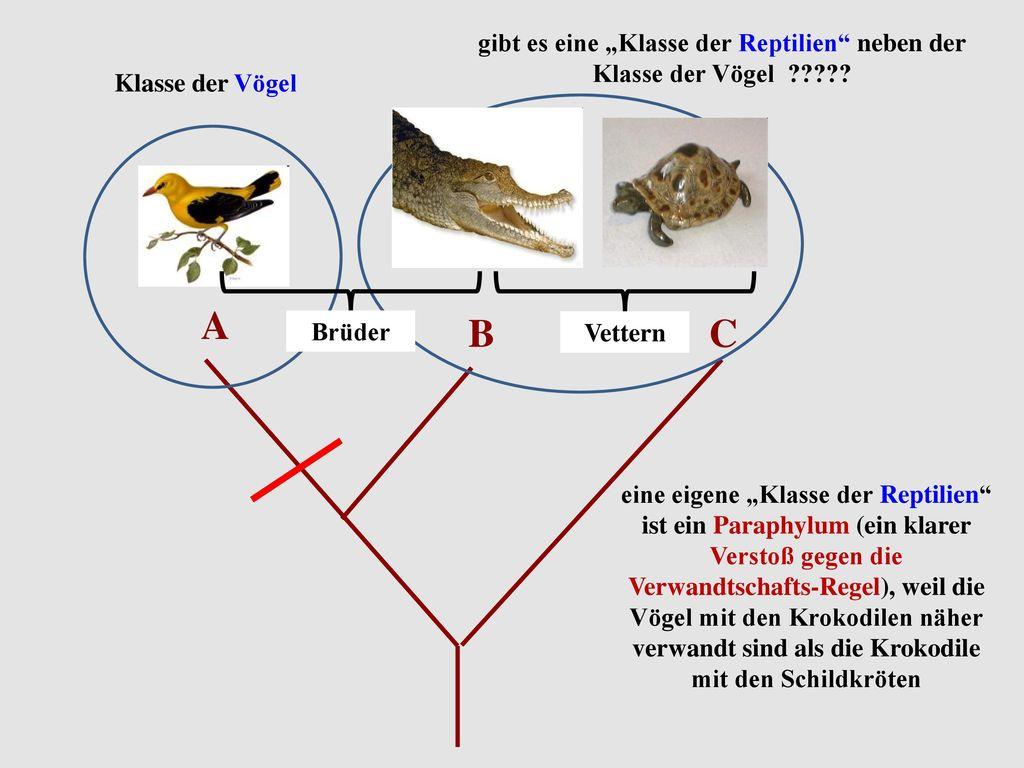 """gibt es eine """"Klasse der Reptilien neben der Klasse der Vögel"""