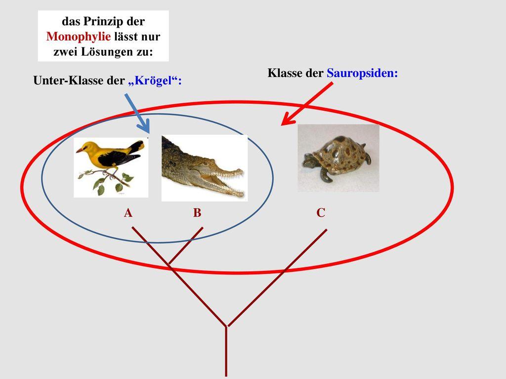 das Prinzip der Monophylie lässt nur zwei Lösungen zu: