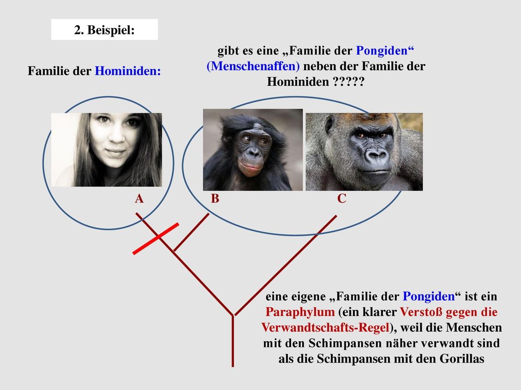 Familie der Hominiden: