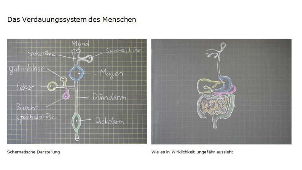 Berühmt Verdauungssystem Anatomie Und Physiologie Fotos ...