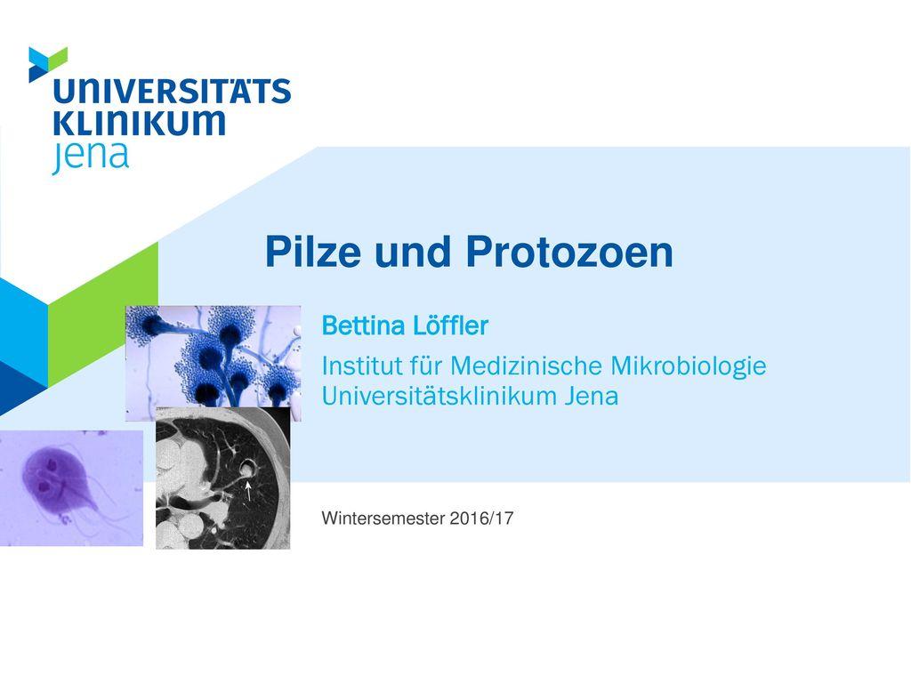 Pilze und Protozoen Bettina Löffler