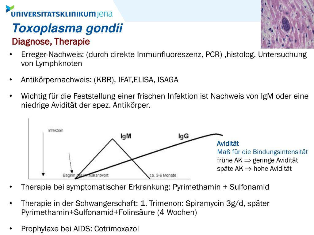 Toxoplasma gondii Diagnose, Therapie