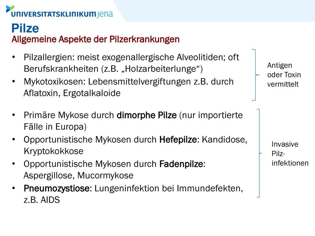 Pilze Allgemeine Aspekte der Pilzerkrankungen