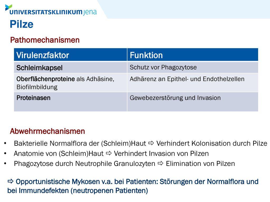 Pilze Virulenzfaktor Funktion Pathomechanismen Abwehrmechanismen
