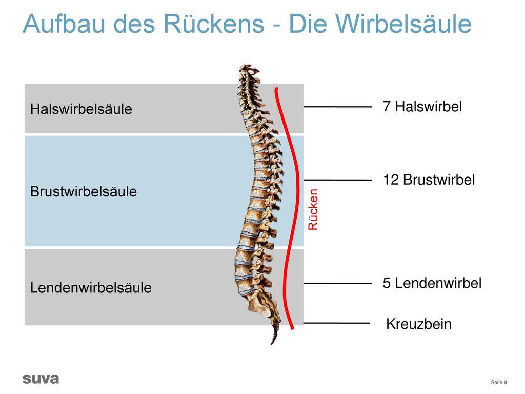 Tolle Anatomie Der Lendenwirbelsäule Galerie - Physiologie Von ...