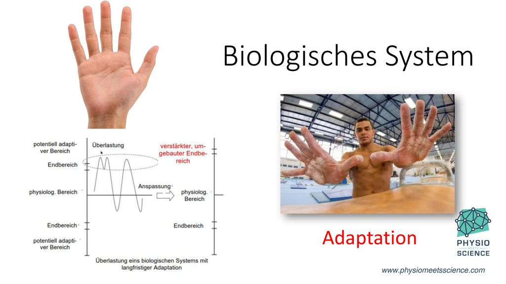 Biologisches System Adaptation www.physiomeetsscience.com