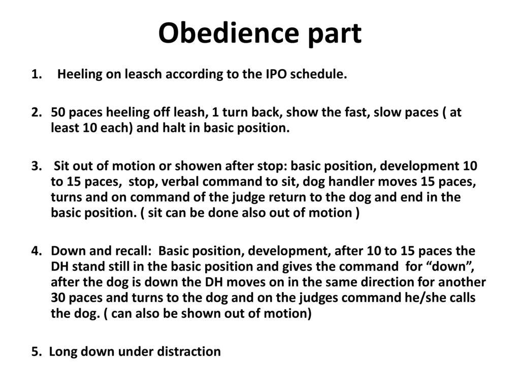 Obedience part Heeling on leasch according to the IPO schedule.