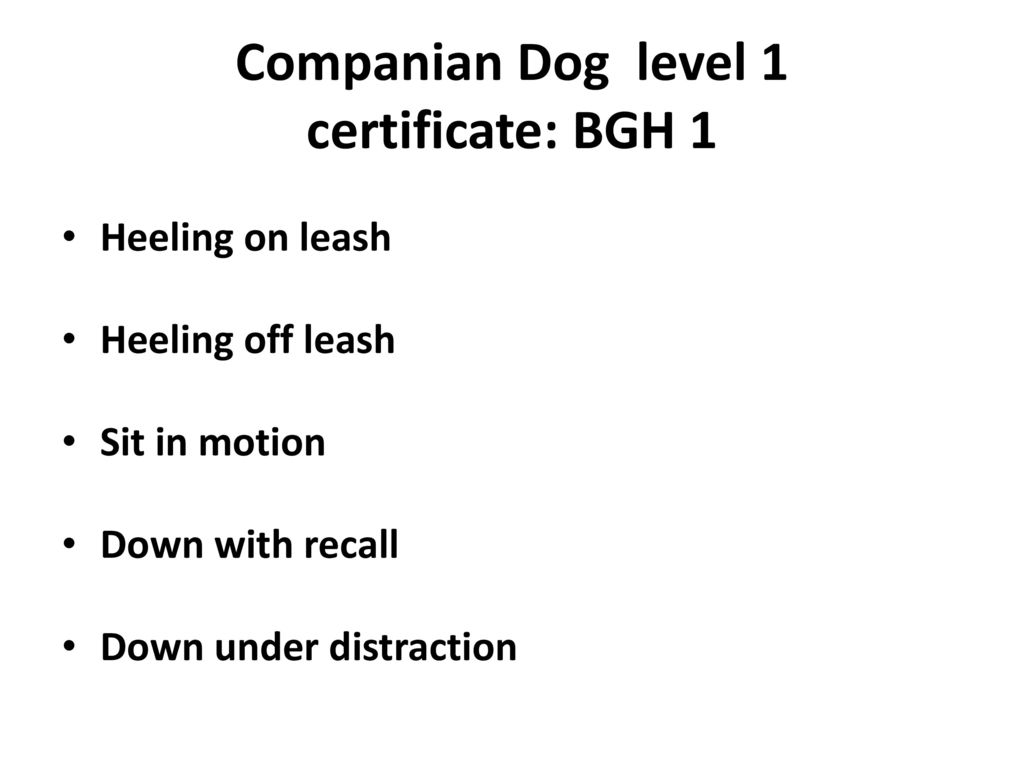 Companian Dog level 1 certificate: BGH 1