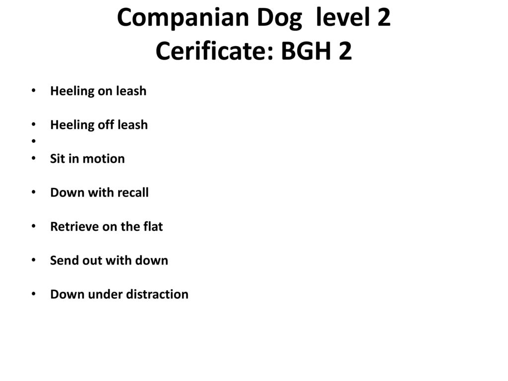 Companian Dog level 2 Cerificate: BGH 2