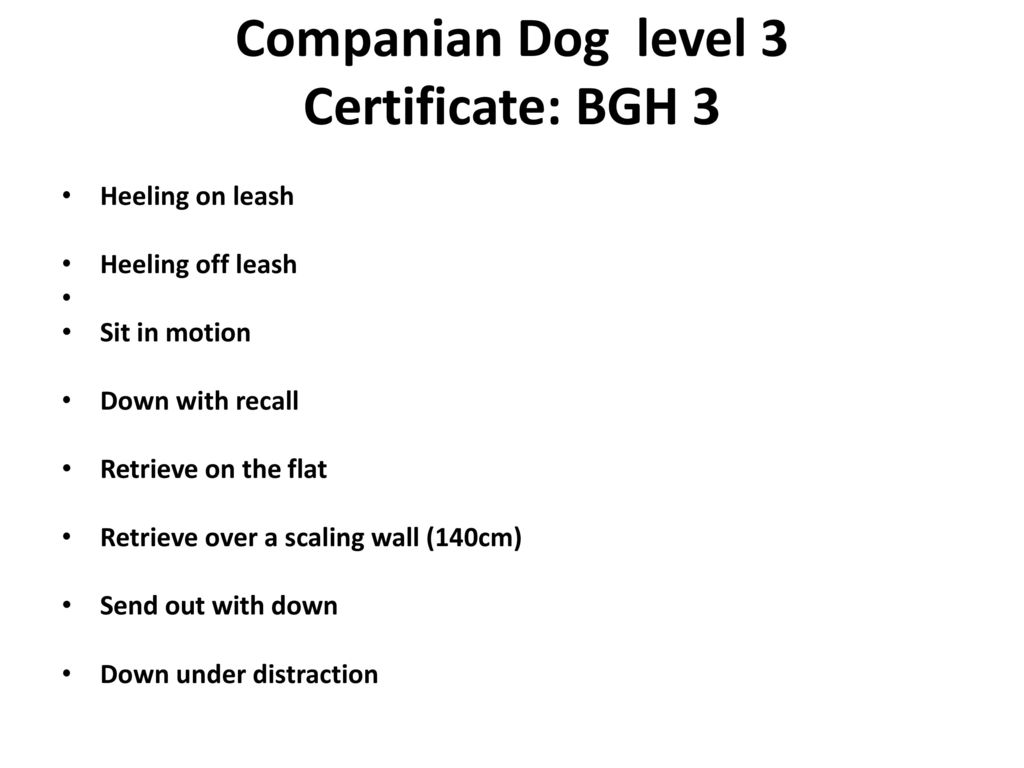Companian Dog level 3 Certificate: BGH 3