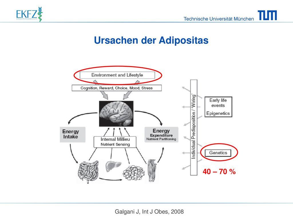 Ursachen der Adipositas