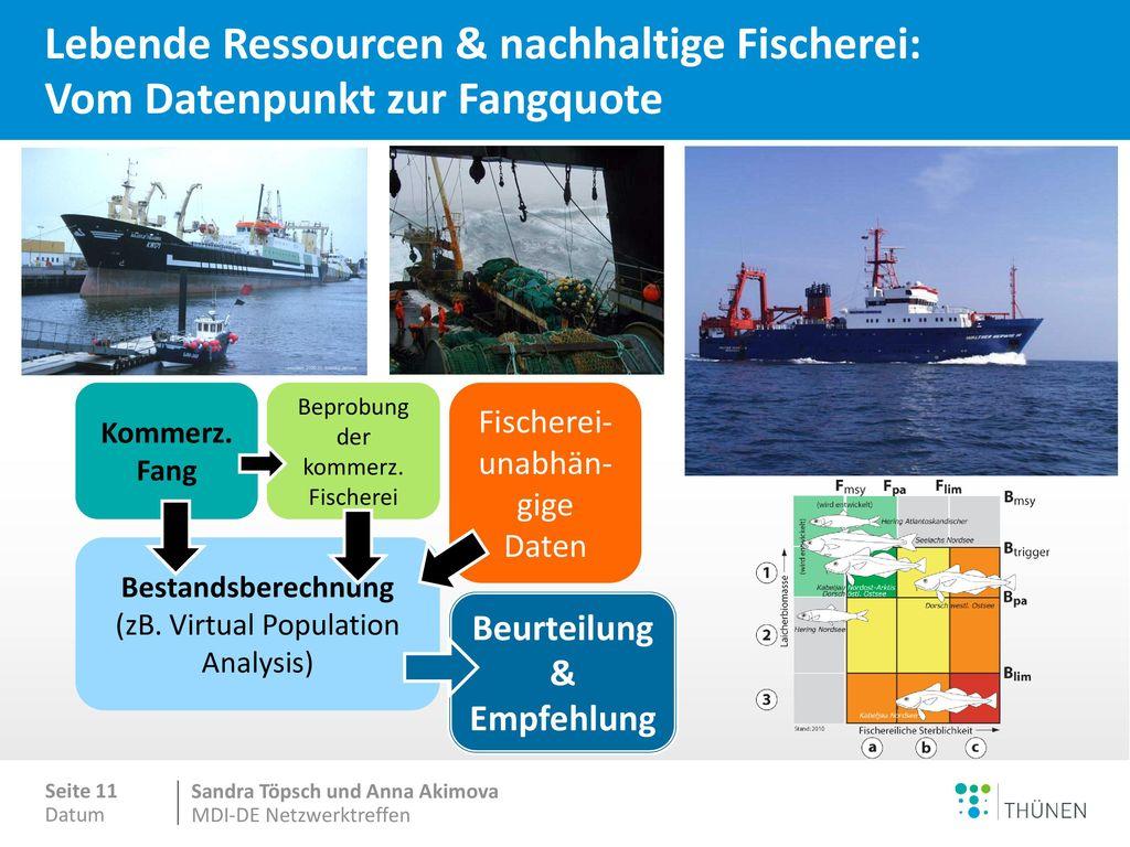 Nachhaltige Bewirtschaftung der Fischbestände – Wo stehen wir in Europa