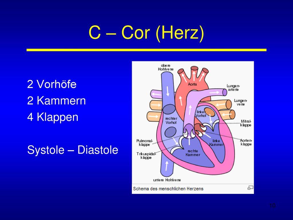 2 Vorhöfe 2 Kammern 4 Klappen Systole – Diastole