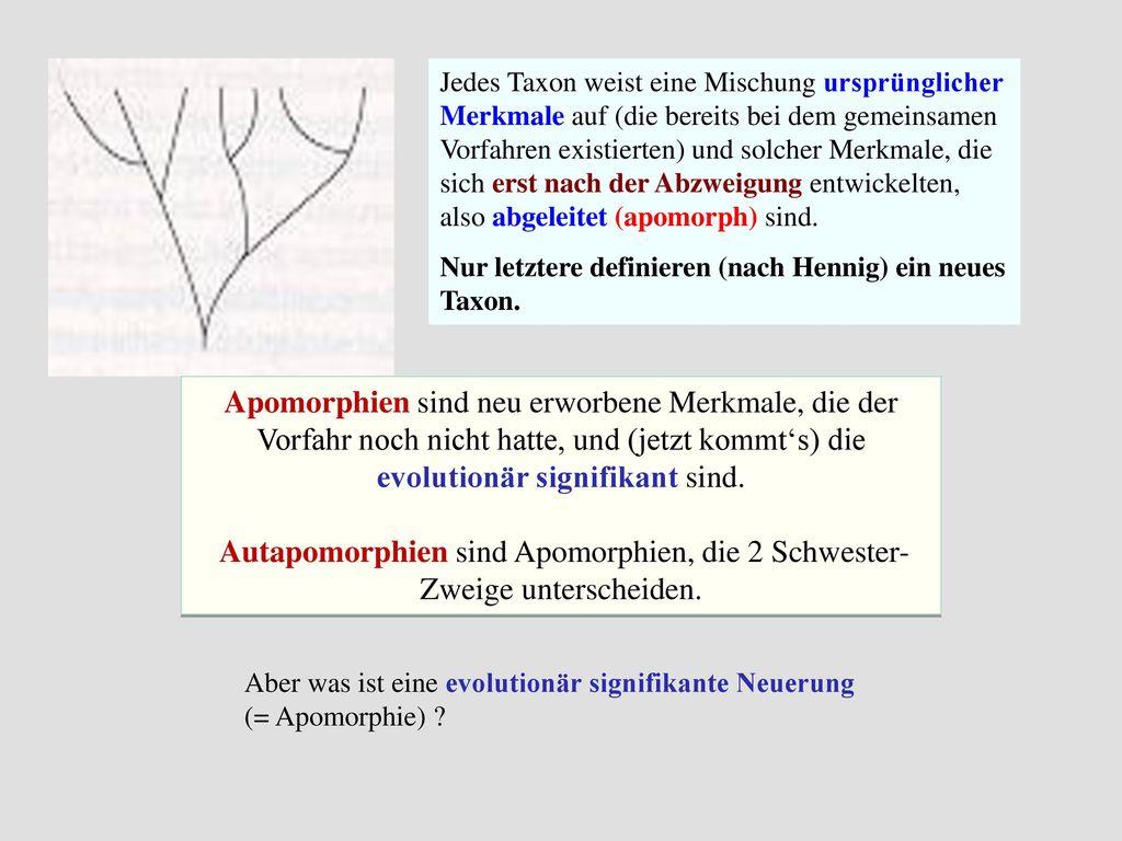 Autapomorphien sind Apomorphien, die 2 Schwester-Zweige unterscheiden.