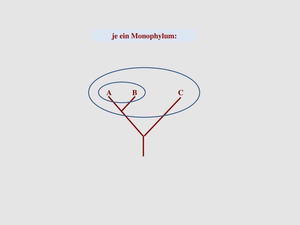 je ein Monophylum: A B C