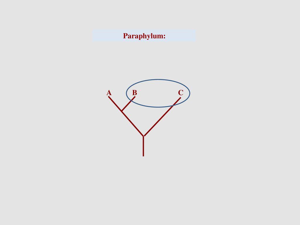 Paraphylum: A B C