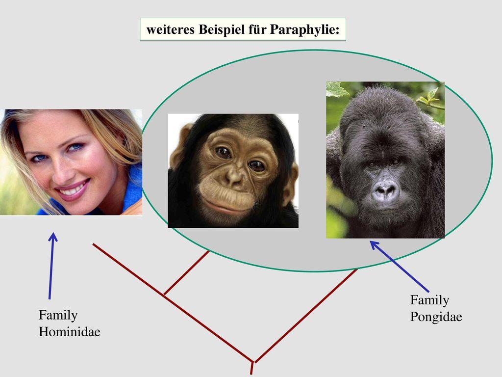 weiteres Beispiel für Paraphylie: