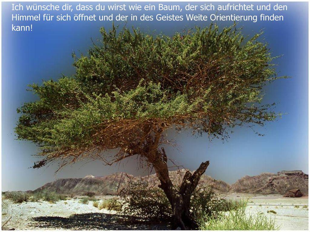 Ich wünsche dir, dass du wirst wie ein Baum, der sich aufrichtet und den Himmel für sich öffnet und der in des Geistes Weite Orientierung finden kann!