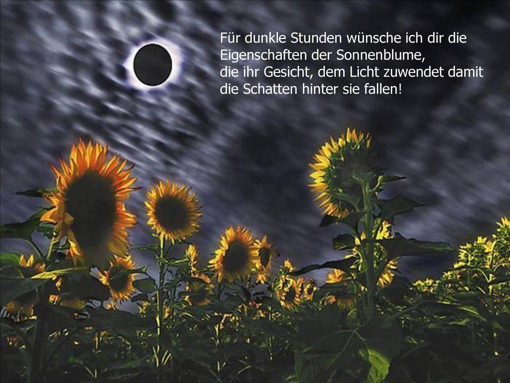 Für dunkle Stunden wünsche ich dir die Eigenschaften der Sonnenblume, die ihr Gesicht, dem Licht zuwendet damit die Schatten hinter sie fallen!
