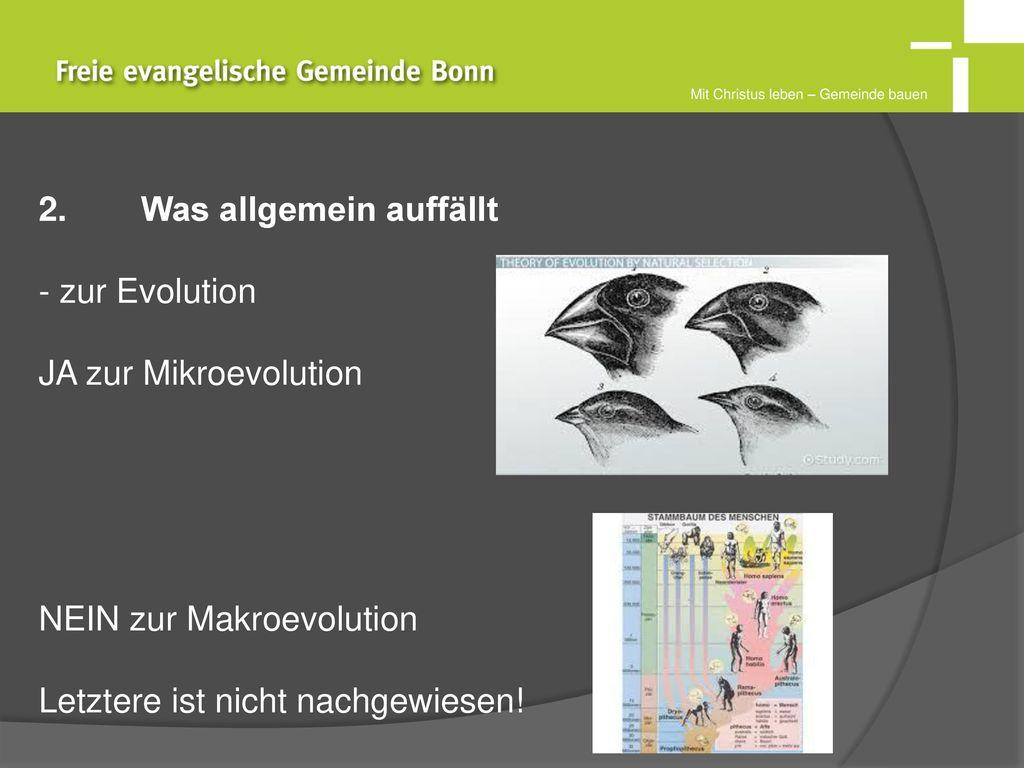 2. Was allgemein auffällt zur Evolution JA zur Mikroevolution