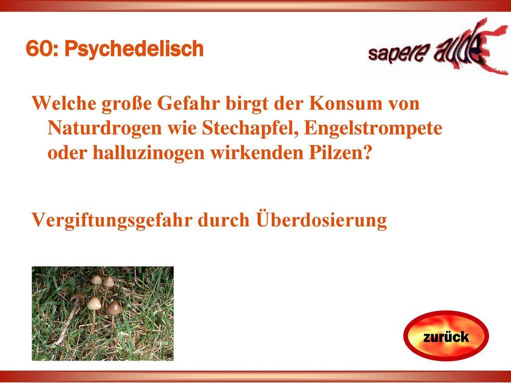 60: Psychedelisch Welche große Gefahr birgt der Konsum von Naturdrogen wie Stechapfel, Engelstrompete oder halluzinogen wirkenden Pilzen
