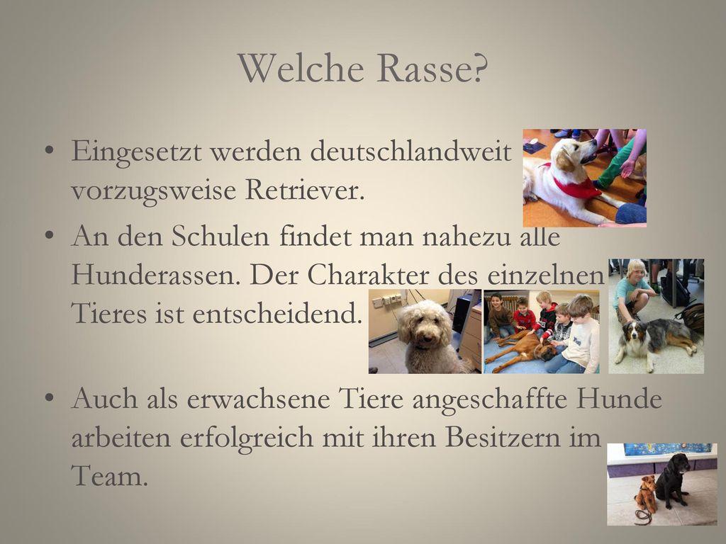 Team Lehrer-Hund Gute Bindung zwischen Lehrer und Hund