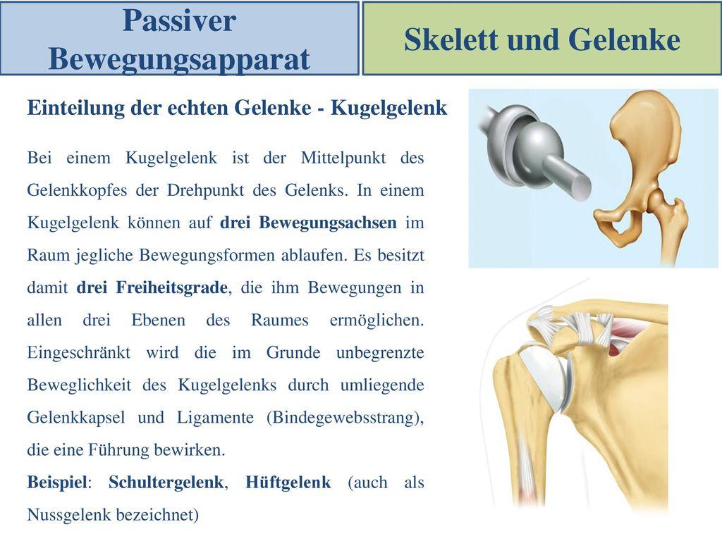 Tolle Schultergelenk Anatomie Ppt Ideen - Physiologie Von ...