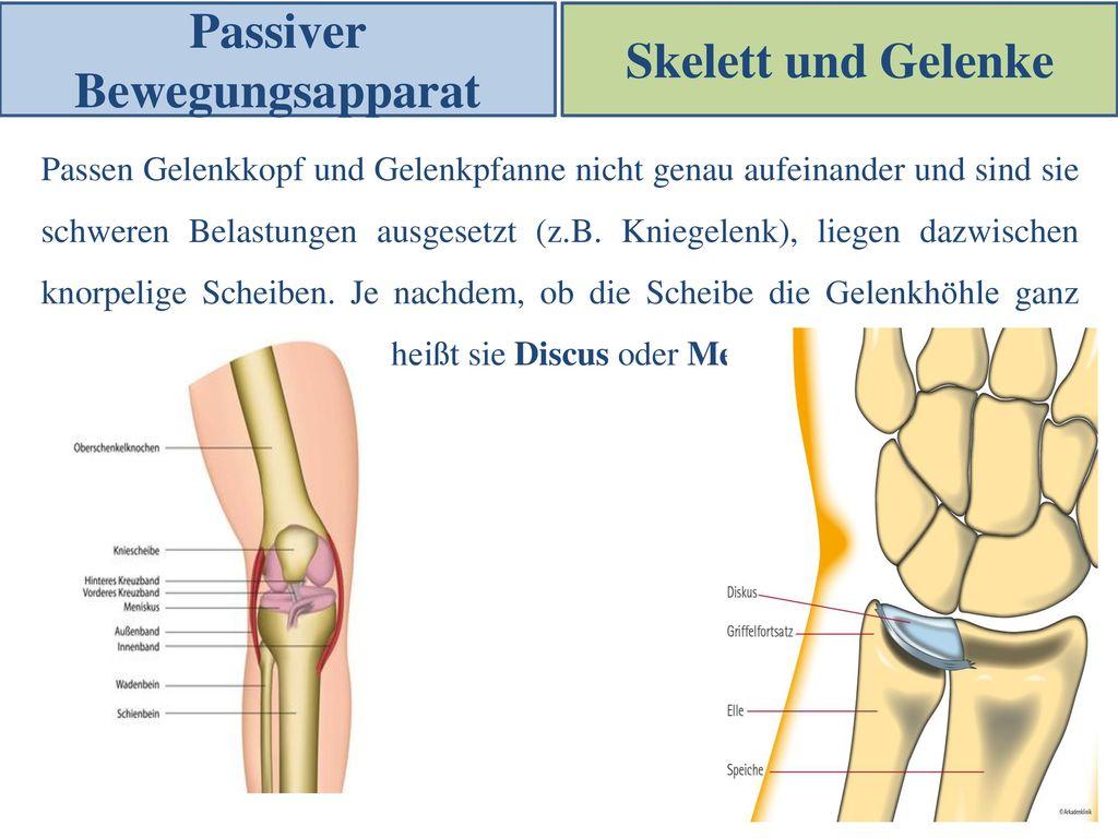 Schön Knochenanatomie Ppt Galerie - Anatomie Ideen - finotti.info