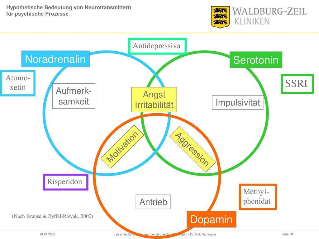 Hypothetische Bedeutung von Neurotransmittern für psychische Prozesse