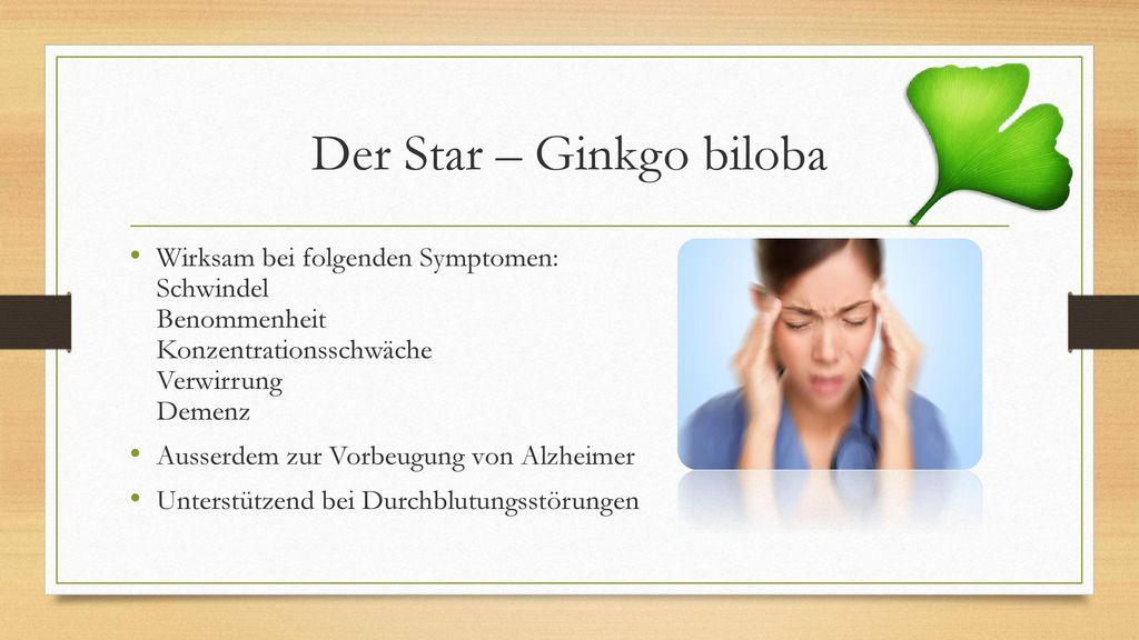 Der Star – Ginkgo biloba