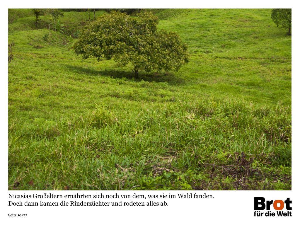 Nicasias Großeltern ernährten sich noch von dem, was sie im Wald fanden. Doch dann kamen die Rinderzüchter und rodeten alles ab.