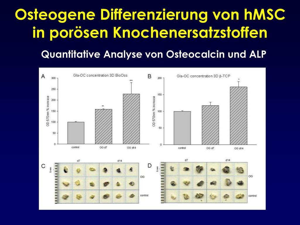 Osteogene Differenzierung von hMSC in porösen Knochenersatzstoffen