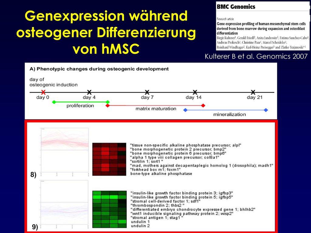 Genexpression während osteogener Differenzierung von hMSC