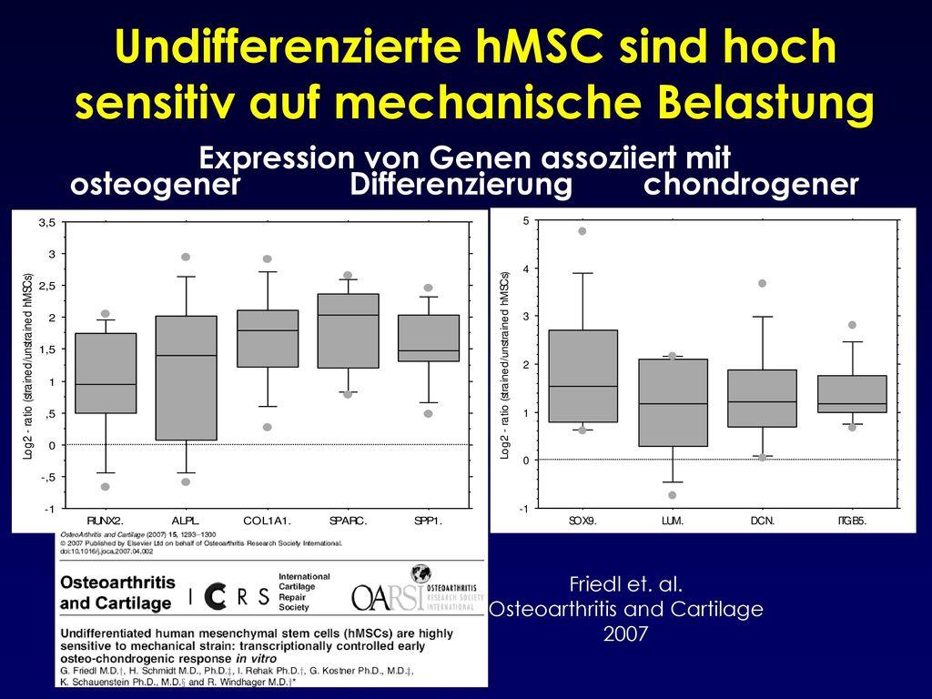 Undifferenzierte hMSC sind hoch sensitiv auf mechanische Belastung