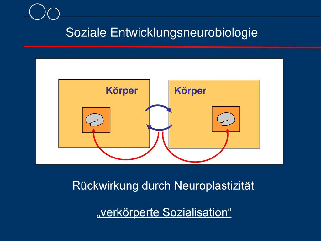 Soziale Entwicklungsneurobiologie